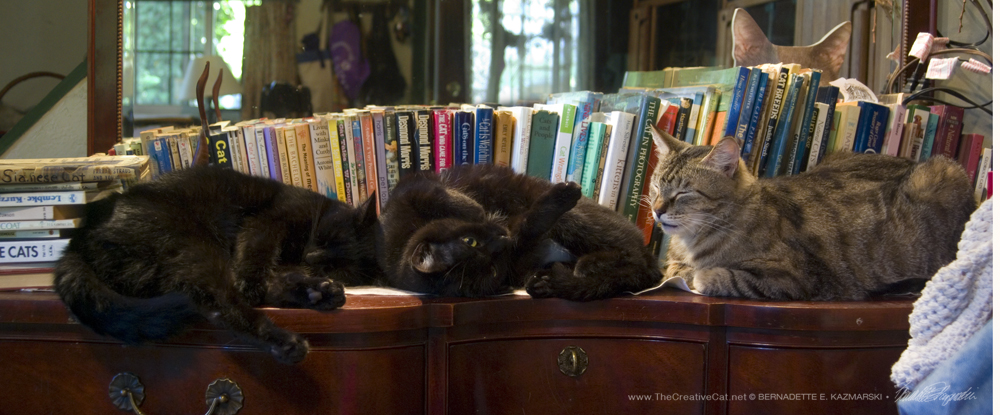 Mr. Sunshine, Jelly Bean and Dickie in my cat book library in 2010