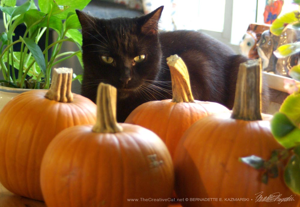 Living Green With Pets: Pumpkin, Pumpkin, Pumpkin!