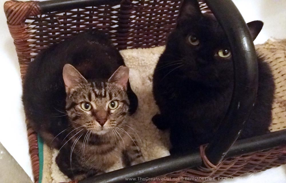 Mia and Scarlett in the basket bed in the tub.