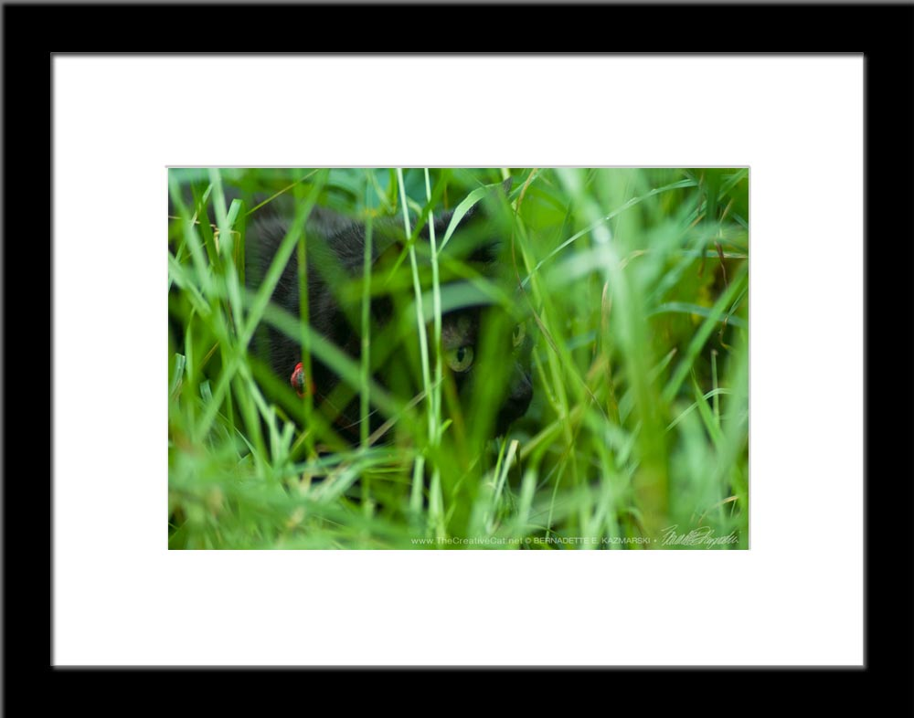 The Huntress: Intent, framed photo.
