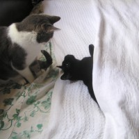two cats playing on bed