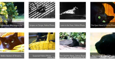Marketplace: New Feline Photos for Prints and Greeting Cards