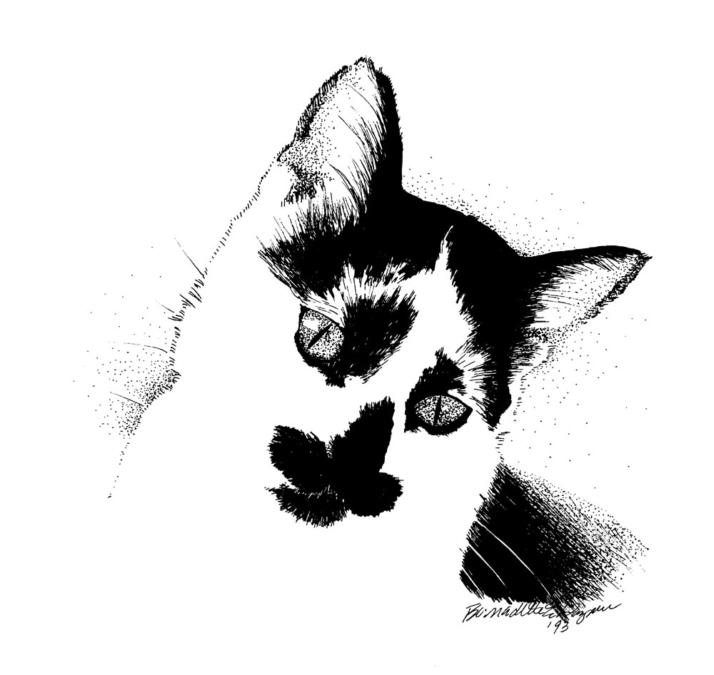 black and white cat ink drawing