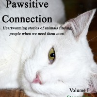 PawsitiveConnectionCATcover_edited-1