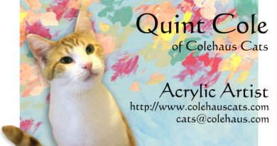 Creating With Cats-By Cats: Quint, a Very Talented Feline Painter