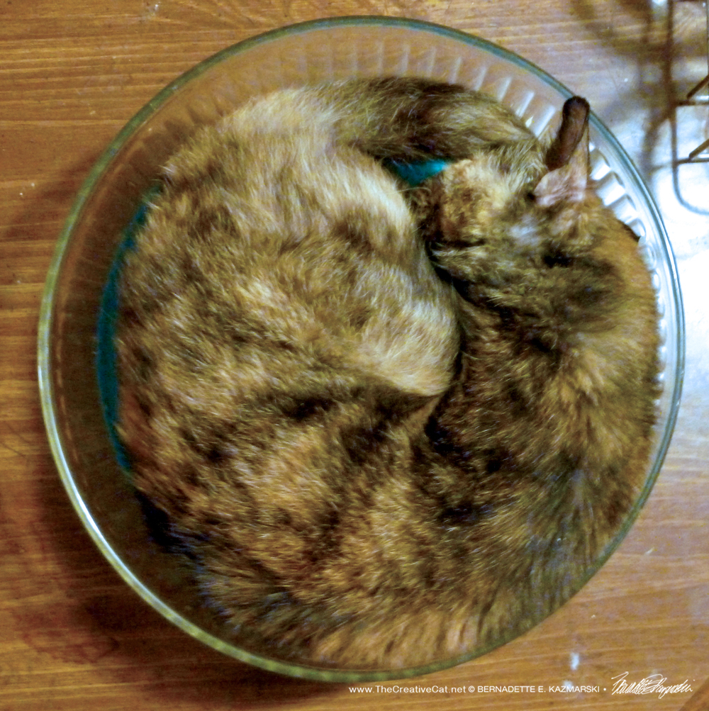 May-Cookie in the Salad Bowl