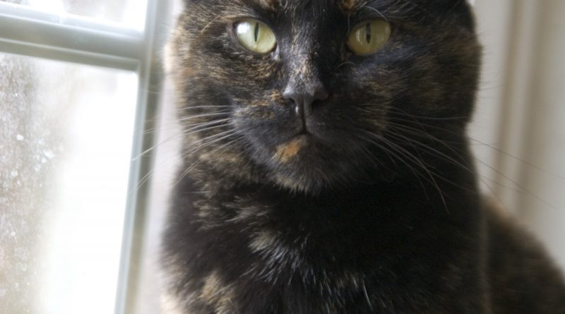 I'm a very dark tortie girl.