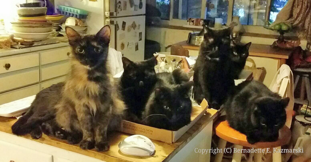 Six in the Kitchen
