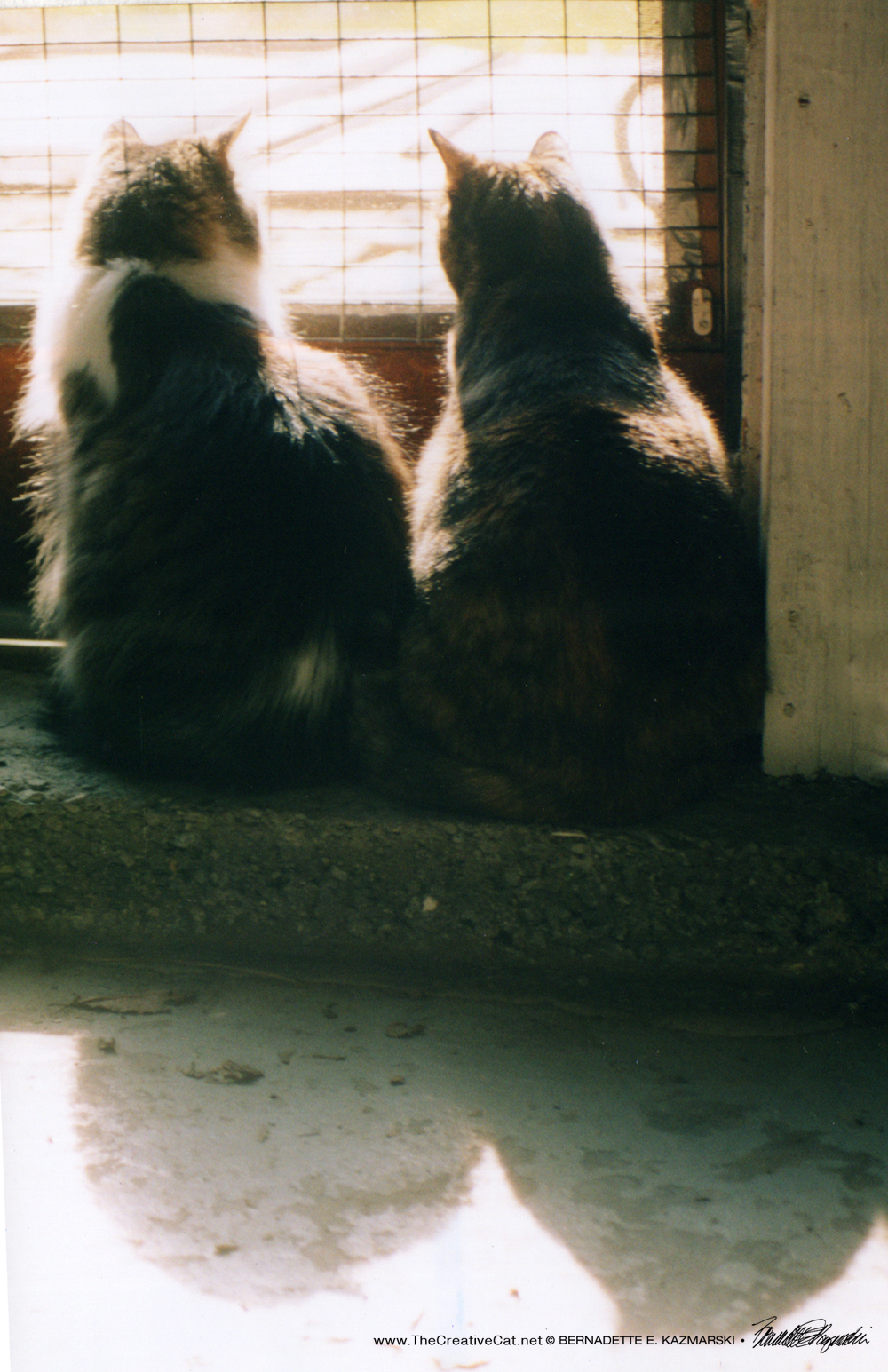 In 2002, Cookie and Sophie sit side by side and look out the door.