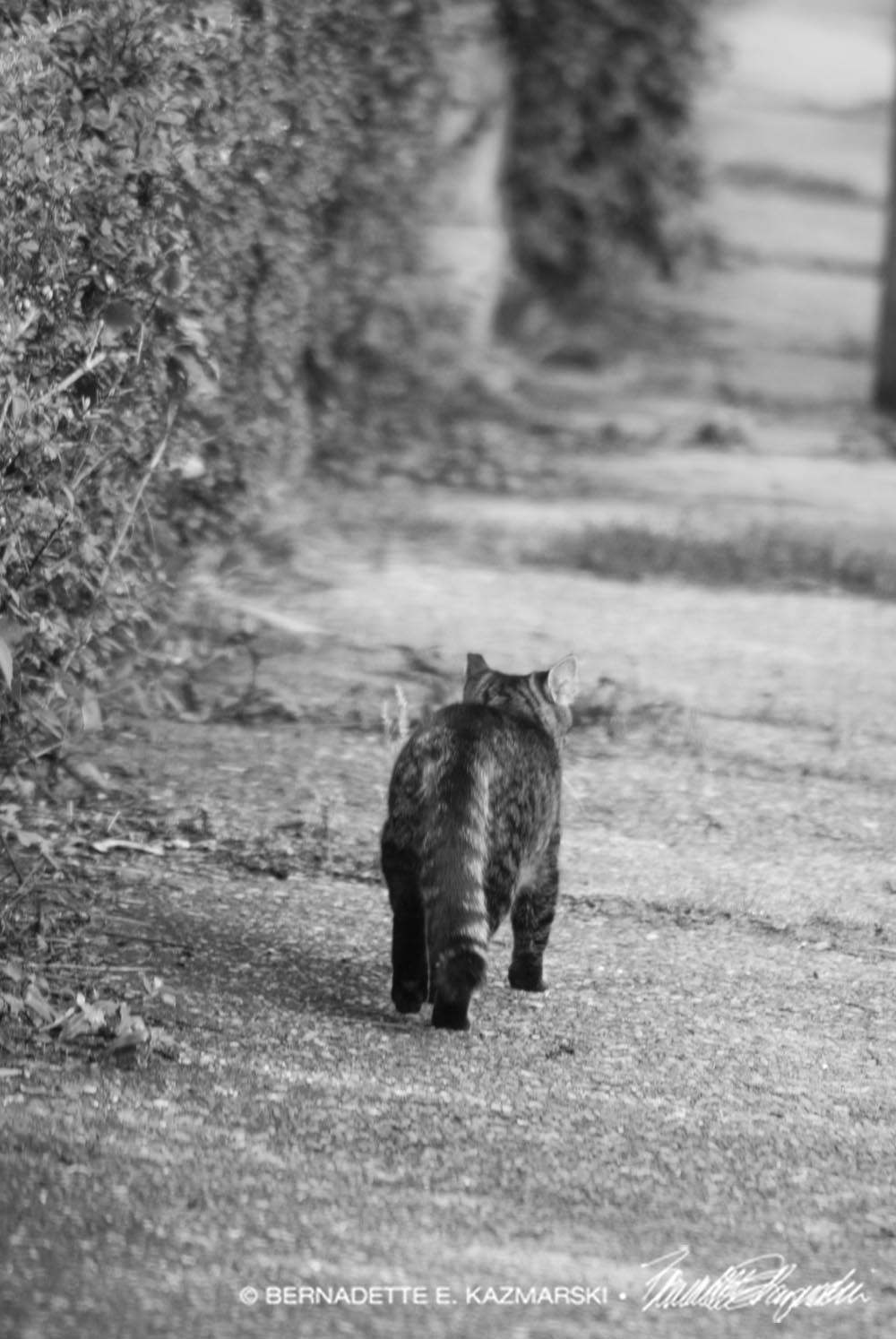 Tabby precedes me down the street, listening behind himself for my step.