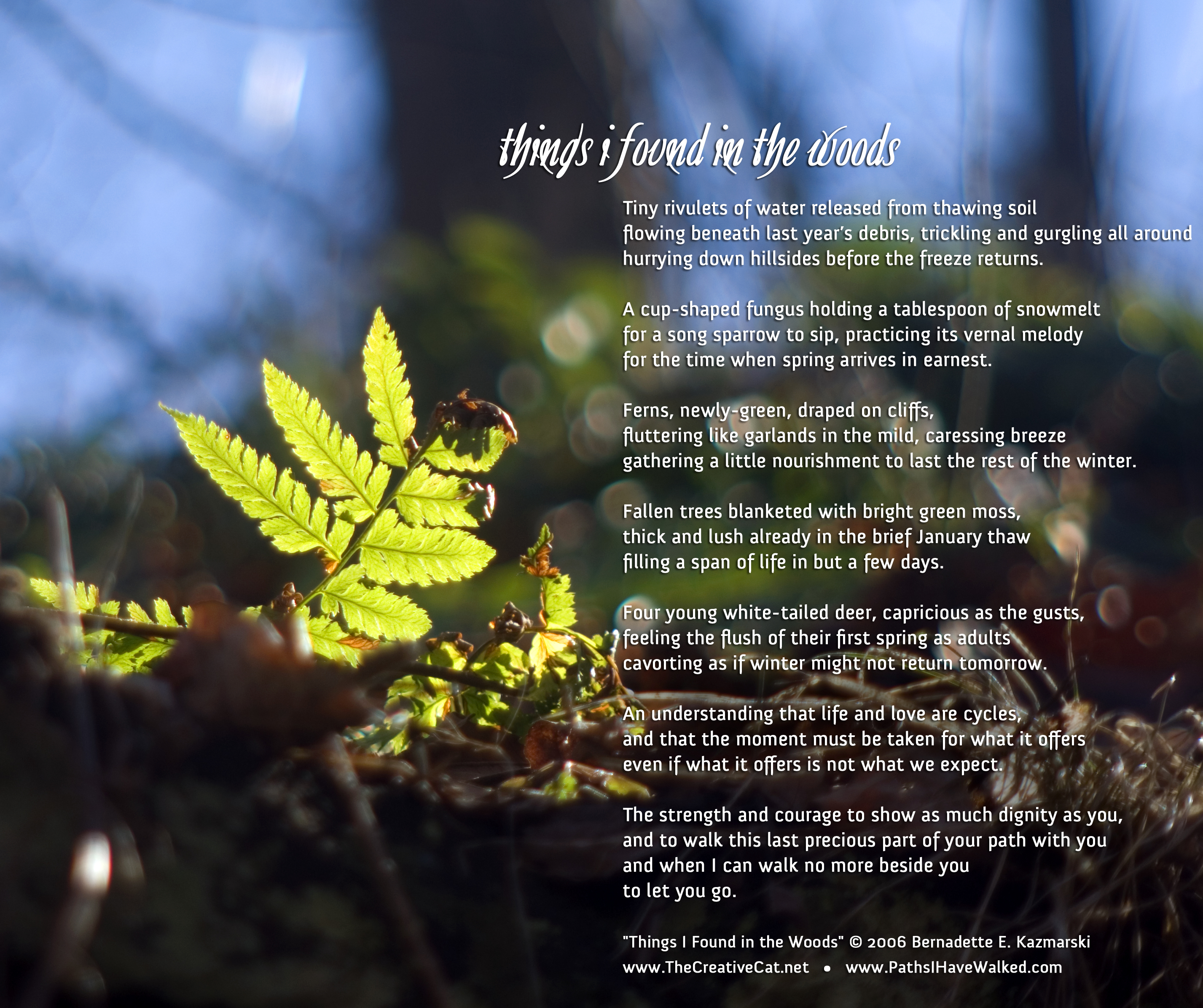 """Things I Found in the Woods"" image and poem."
