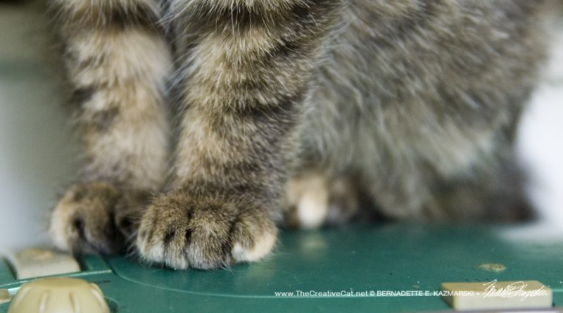 And I have some marbled toes. I'm a torbie.