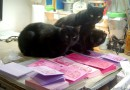 Featured Artwork: Hand-printed Valentine Cards (Purr-sonally Inspected By Discerning Black Cats)