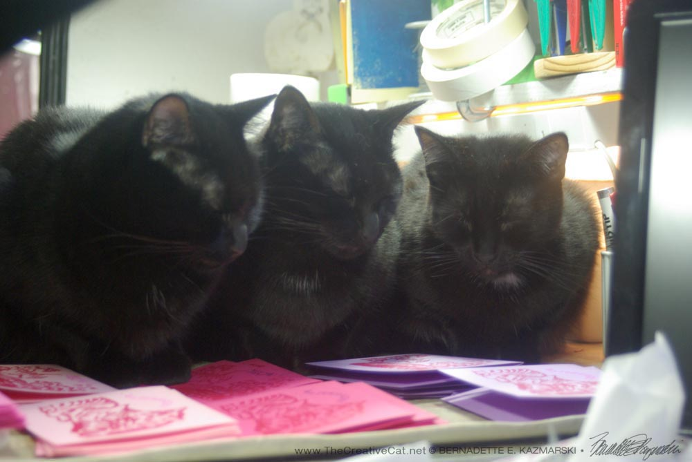 """These cats are all covered with funny markings,"" say the three perfect black cats. They are very serious about their job."
