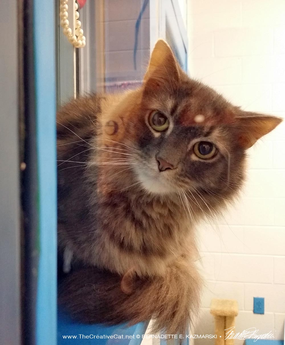 tabby cat in shelter
