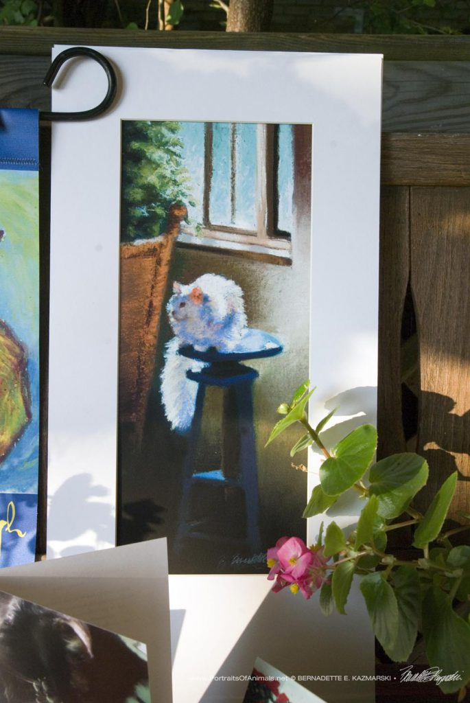 """White Cat Reflecting"" matted to fit a 10"" x 2-"" frame."