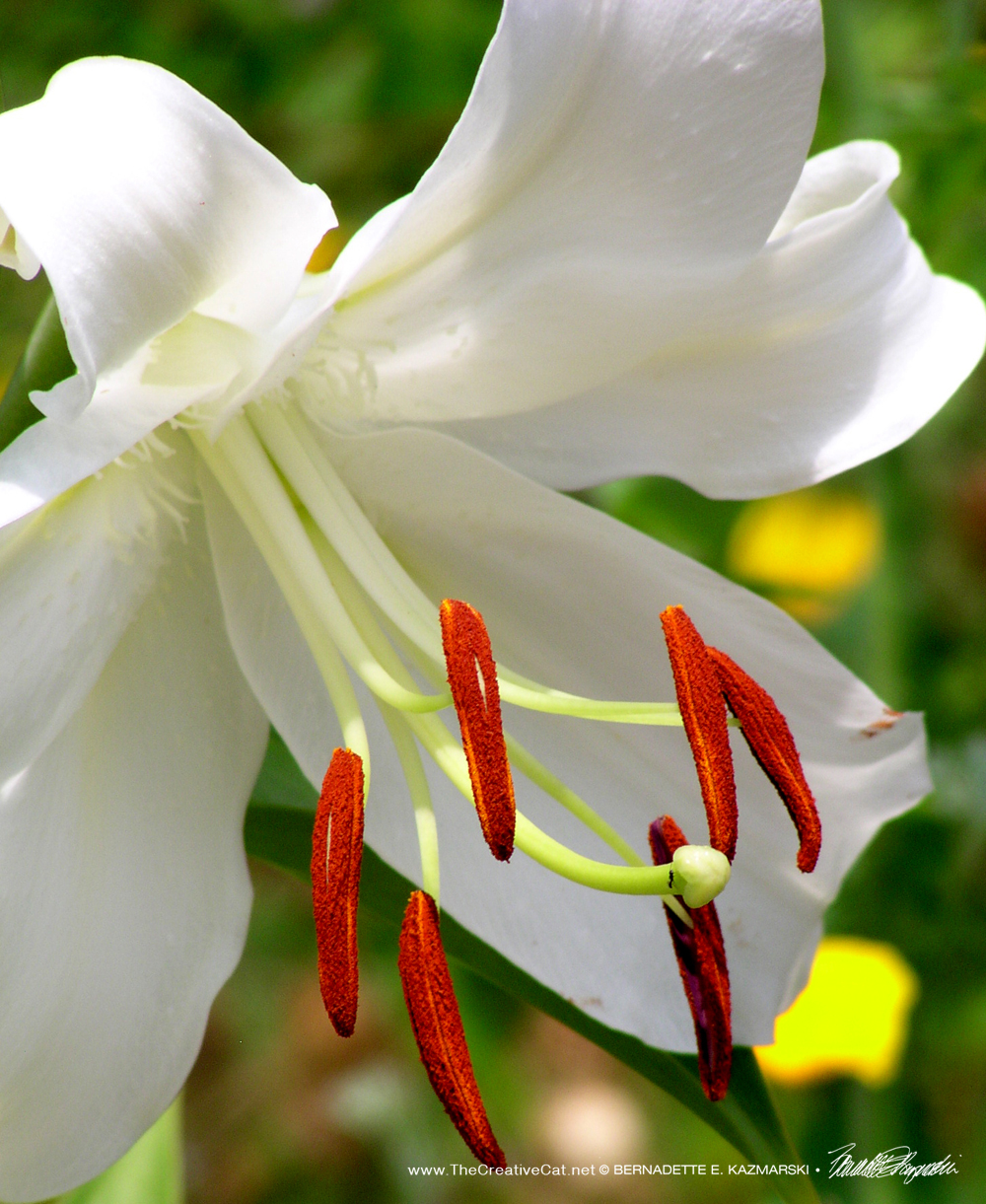 Leave the Lilies Outside: Toxic Plants and Cut Flowers