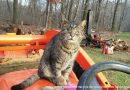 Rescue Story: Willie, Boss Cat
