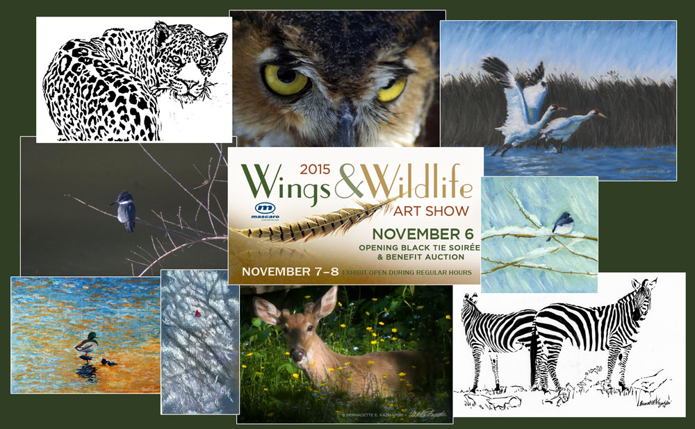 Featured Artwork: Wings & Wildlife Art Show November 6-7-8