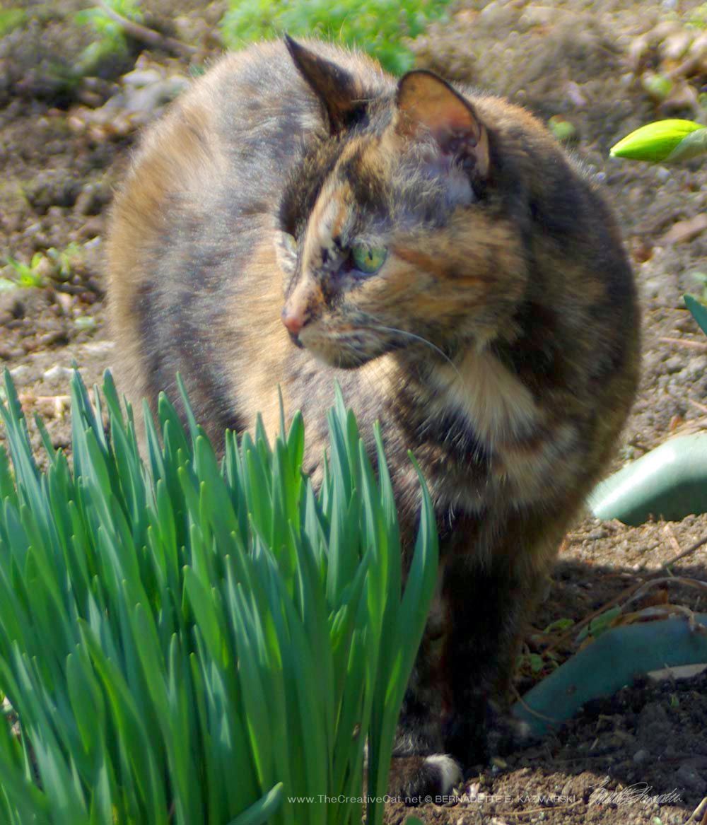 Cookie with the daffodils.